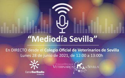 """Emisión en DIRECTO de """"Mediodía Sevilla"""", de Canal Sur Radio, desde la sede del Ilustre Colegio de Veterinarios de Sevilla"""