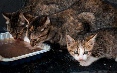 El Colegio de Veterinarios de Sevilla visita Gines para informar sobre el control de colonias felinas y la implementación de un protocolo propio para su gestión