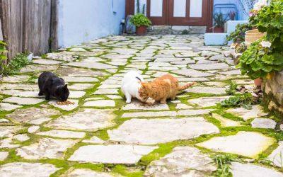 El I.C.O.V. de Sevilla se reúne con el Director General de Salud Pública y el Director del Laboratorio Municipal del ayuntamiento de Sevilla para abordar la problemática de las colonias urbanas felinas
