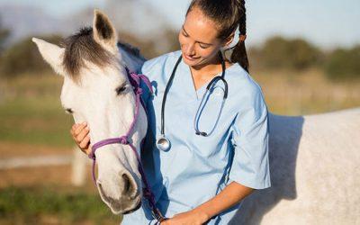 """Alrededor de 300 veterinarios asistieron al curso de """"Acceso y actualización en Identificación Equina"""""""
