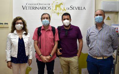 El Ayuntamiento de Mairena del Aljarafe visita la sede colegial para conocer el protocolo de gestión y control de colonias felinas del I.C.O.V.S.